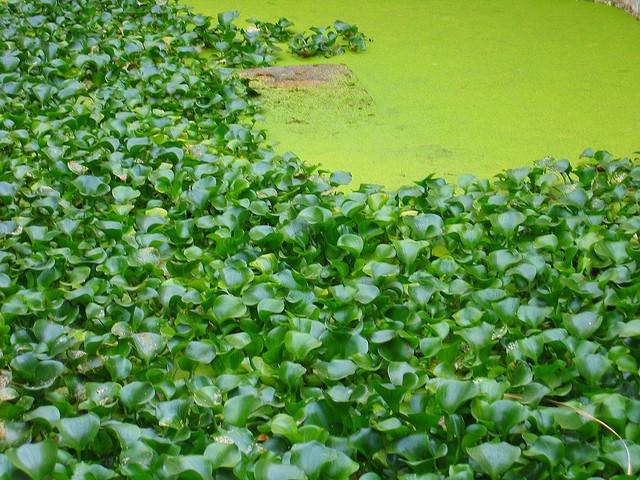 Alimentación de las tortugas de agua  Tortugas de agua